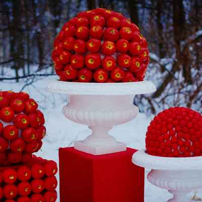 Fruit winter photo session decor