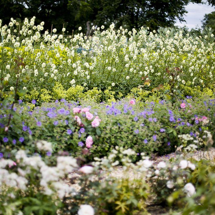 Garden Shots