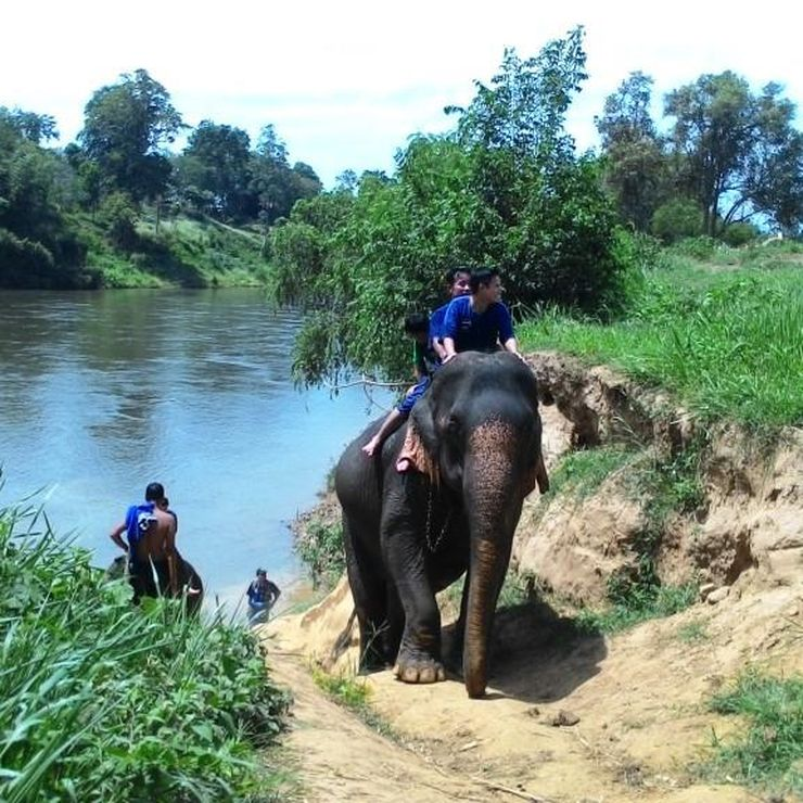 Authentic hand-written testimonial ref elephant program in Kanchanaburi Thailand