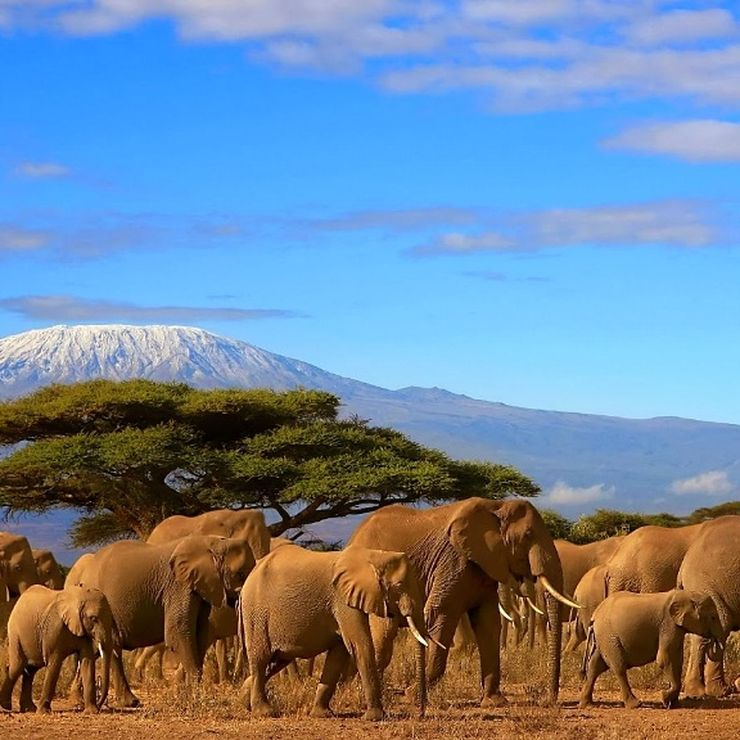 We offer and organize all Tanzania Safari Holidays